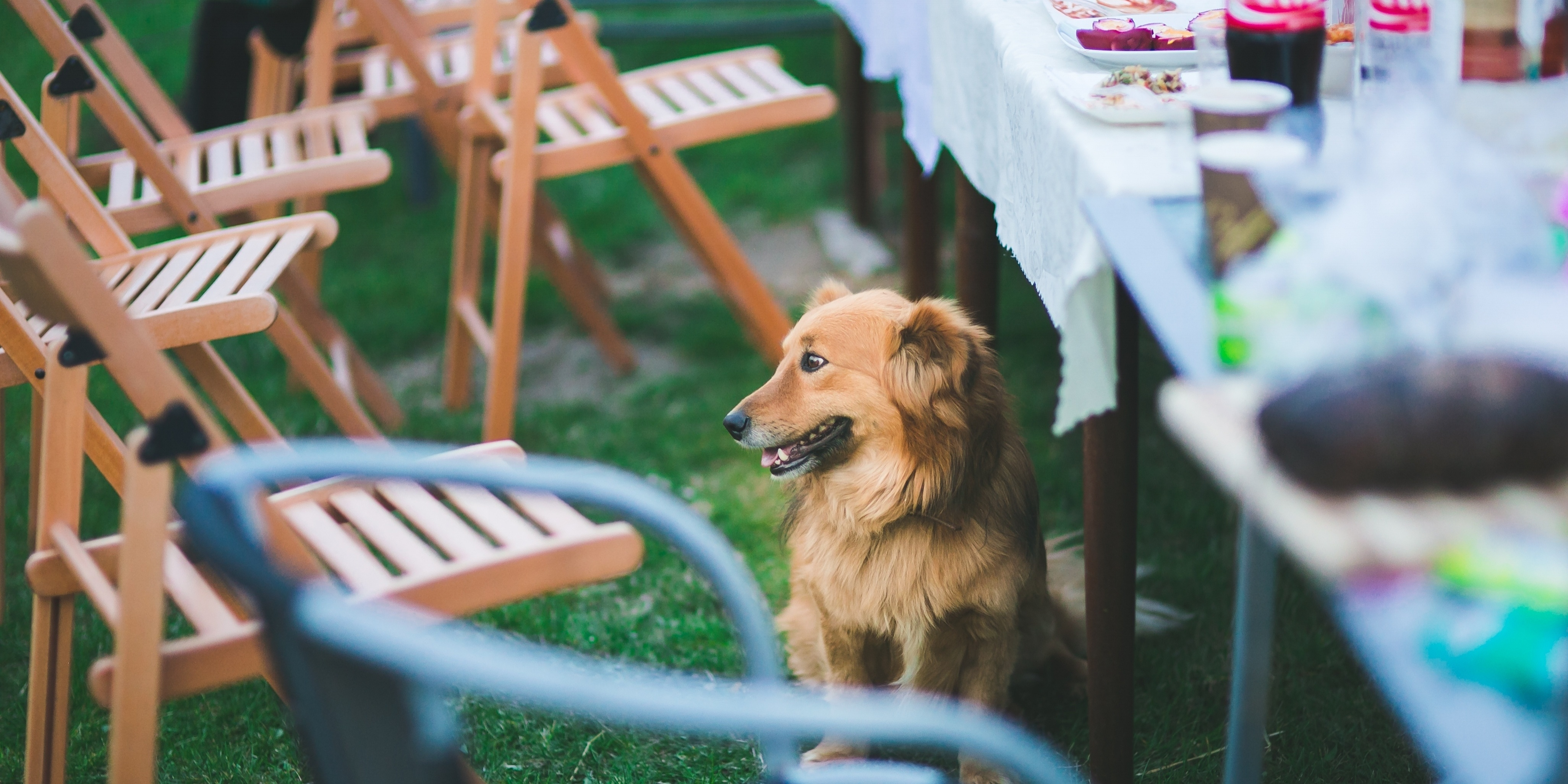 pet-friendly restaurant