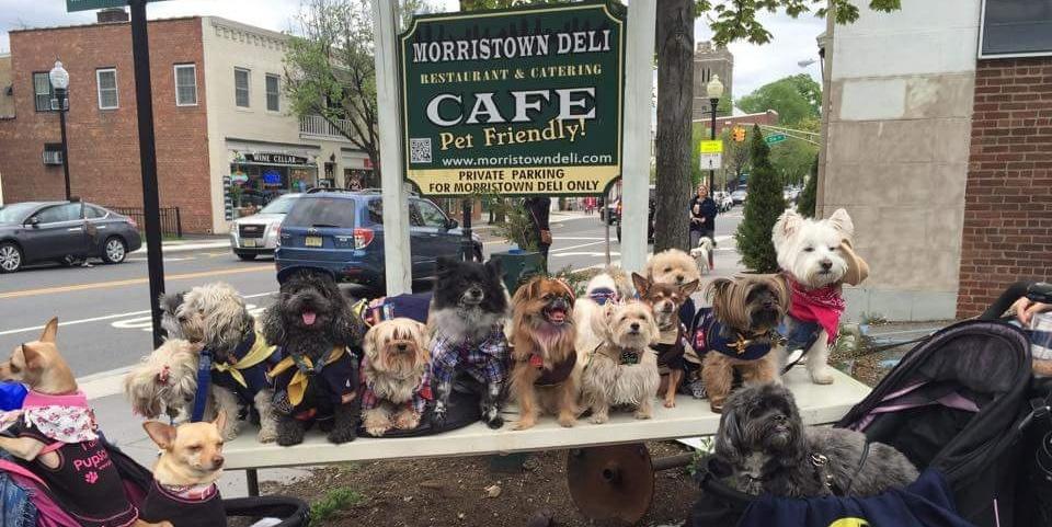 why have dog-friendly restaurants